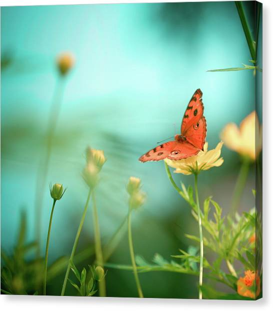 Butterfly Canvas Print - She Rests In Beauty by Patricia Ramos