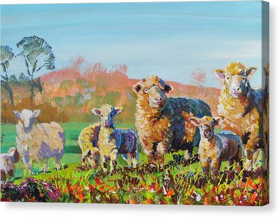 Sheep And Lambs In Devon Landscape Bright Colors Canvas Print