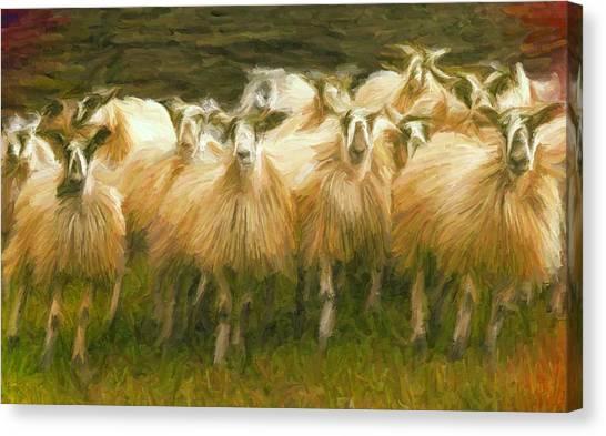 Sheep At Hadrian's Wall Canvas Print