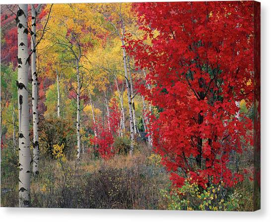 Sheep Canyon In Autumn Canvas Print by Leland D Howard