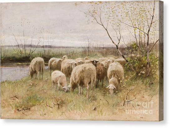 Rebirth Canvas Print - Sheep by Francois Pieter ter Meulen