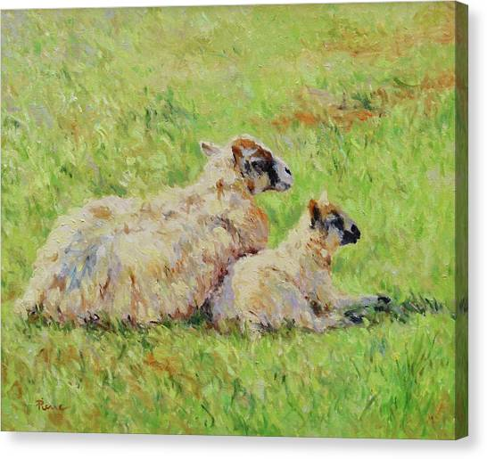 Sheep In The Spring Time,la Vie Est Belle Canvas Print