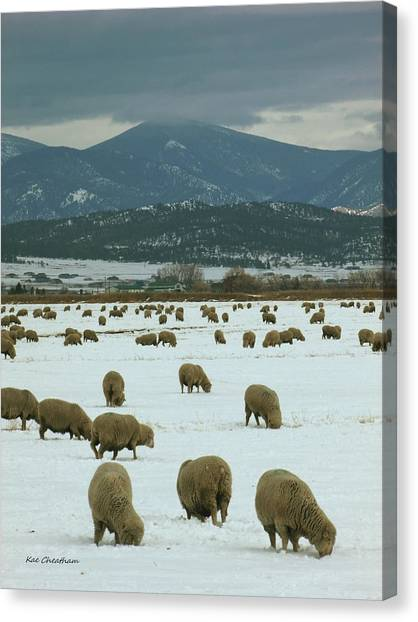 Sheep On Winter Field Canvas Print