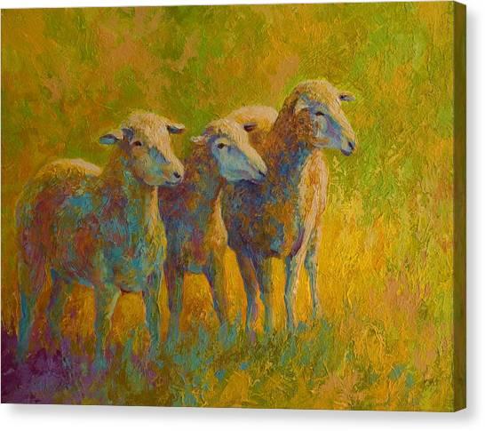 Ewe Canvas Print - Sheep Trio by Marion Rose