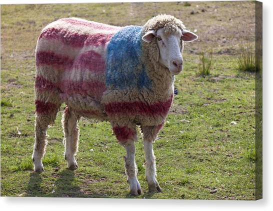 Gay Flag Canvas Print - Sheep With American Flag by Garry Gay