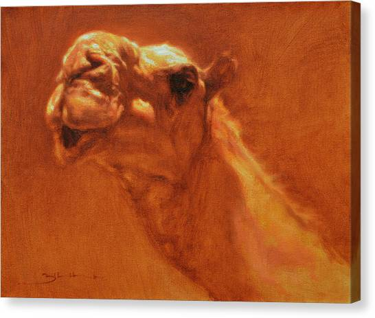 Camels Canvas Print - Sheikh Jamel by Ben Hubbard