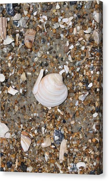 Shell 1 Canvas Print by Marcie Daniels