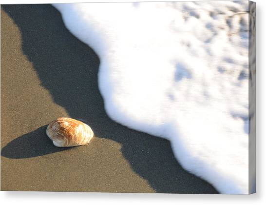 Shell And Waves Part 3 Canvas Print by Alasdair Turner