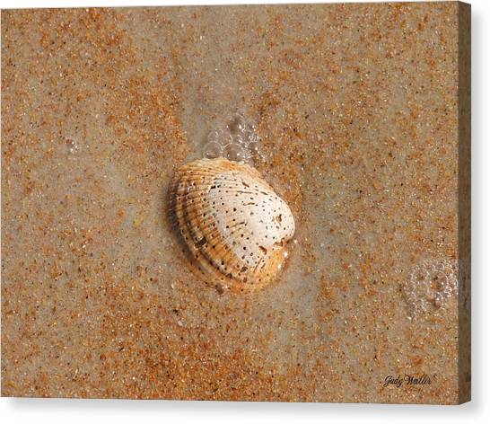Shell Canvas Print by Judy  Waller