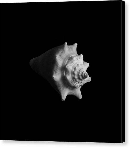 Shell No. 4 Canvas Print by Henry Krauzyk