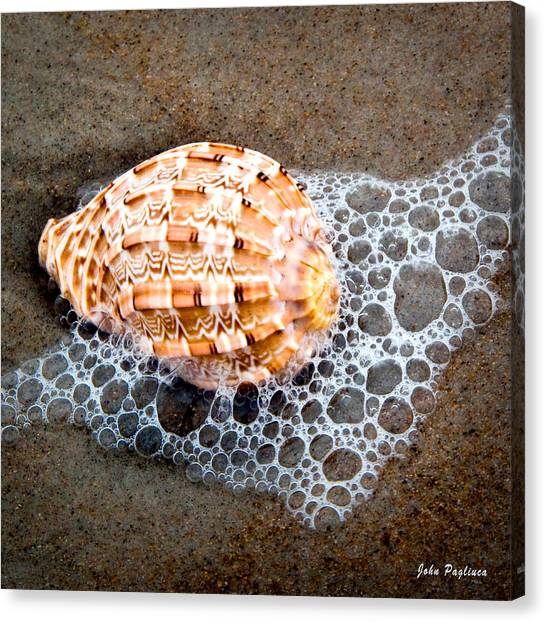 Shell Series No. 4 Canvas Print