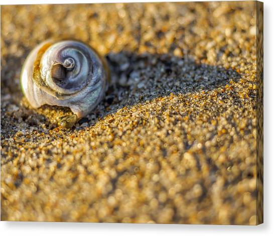 Shell Canvas Print by Steve Spiliotopoulos