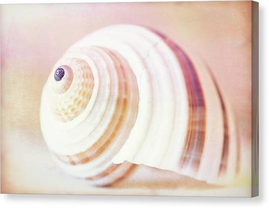 Shell Study No. 02 Canvas Print