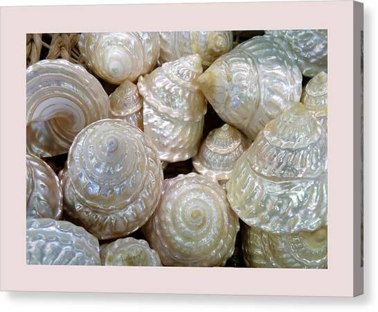 Shells - 4 Canvas Print