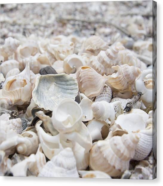 Shells 2 Canvas Print