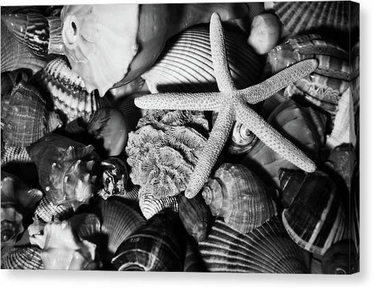 Canvas Print featuring the photograph Shells And Starfish In Black And White by Angie Tirado