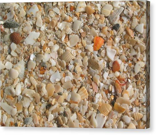 Shells  Canvas Print by Eliot LeBow