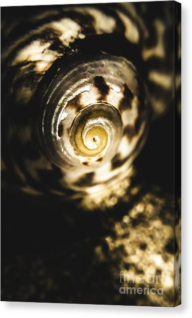 Fibonacci Canvas Print - Shells In Detail by Jorgo Photography - Wall Art Gallery