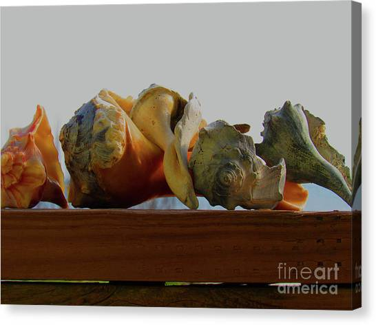 Shells Of The Sea In Orange And Gray Canvas Print
