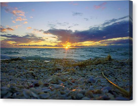 Shells On The Beach At Sunset Canvas Print