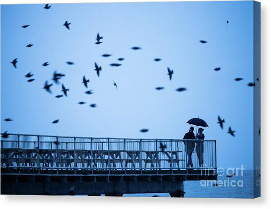 Sheltering Under An Umbrella Watching The Birds Canvas Print