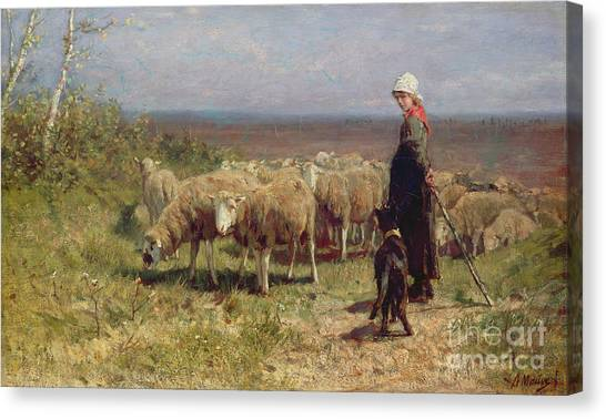 Shepherd Canvas Print - Shepherdess by Anton Mauve