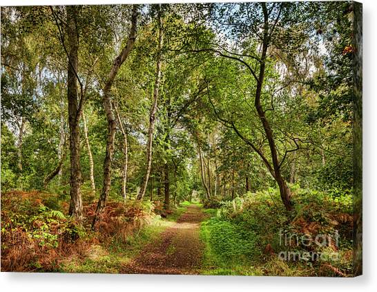 Sherwood Forest Canvas Print - Sherwood Forest, England by Colin and Linda McKie