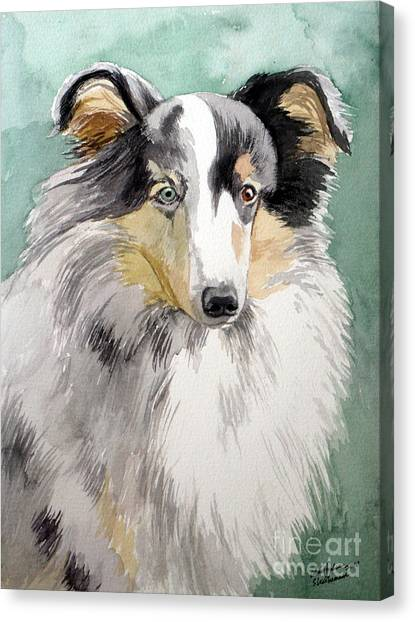Shetland Sheep Dog Canvas Print