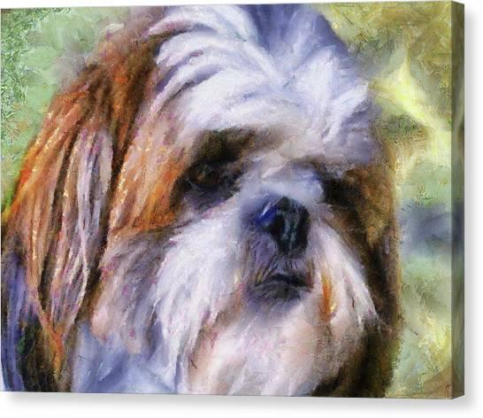 Shih Tzu Portrait Canvas Print