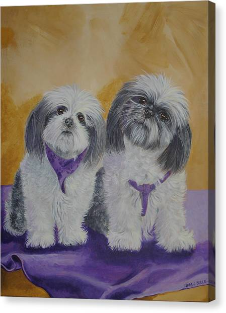 Shih Tzus Canvas Print - Shih Tzus by Laura Bolle