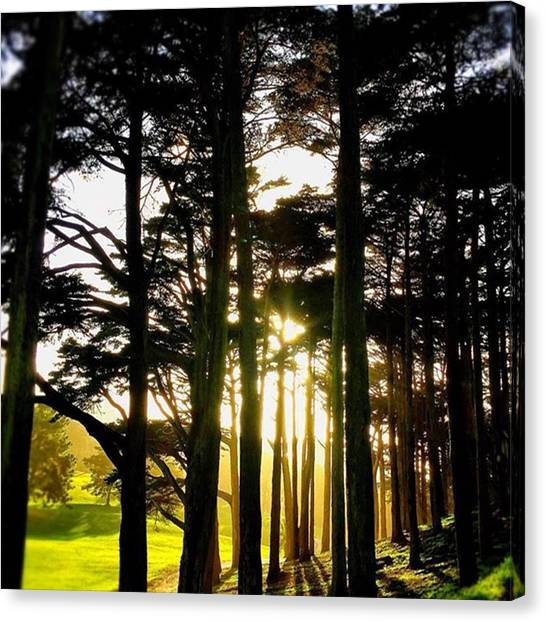 Grove Canvas Print - Shine On. #sun #sunshine #beautiful by Steven Shewach