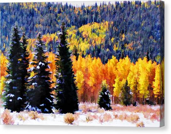 Shivering Pines In Autumn Canvas Print