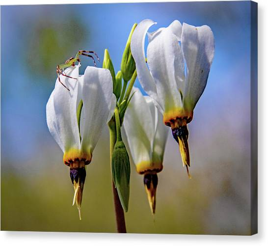 White Spider Flower Canvas Prints Page 18 Of 19 Fine Art America