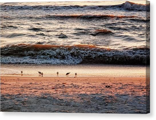 Canvas Print featuring the photograph Shorebirds by Lars Lentz