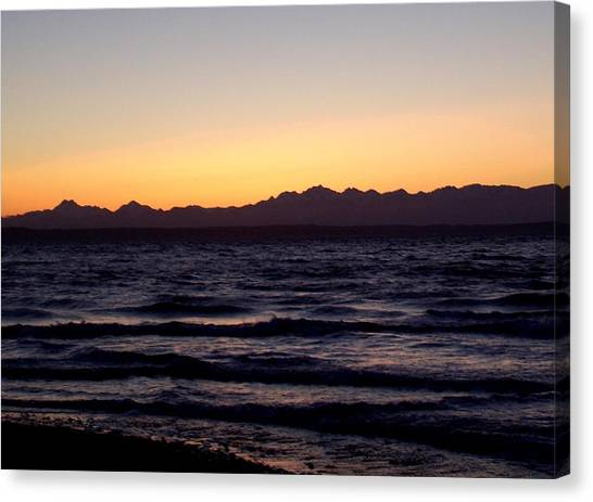 Saltwater Life Canvas Print - Shoreline  by Kevin D Davis