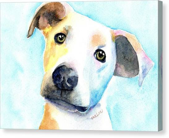 Small Mammals Canvas Print - Short Hair White And Brown Dog by Carlin Blahnik CarlinArtWatercolor