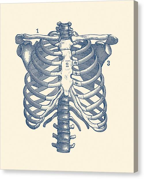 Antique Anatomy Drawings Canvas Prints Page 2 Of 4 Fine Art America