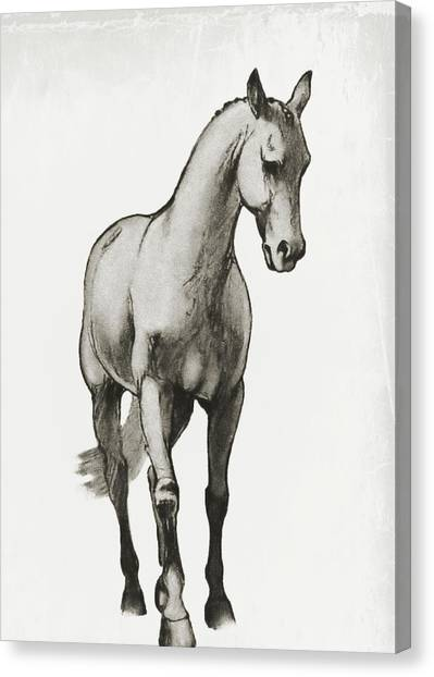 Shoulder-in Sketch Canvas Print by JAMART Photography