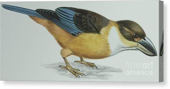 Kingfisher Canvas Print - Shovel-billed Kookaburra by Italian School