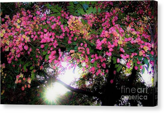 Shower Tree Flowers And Hawaii Sunset Canvas Print