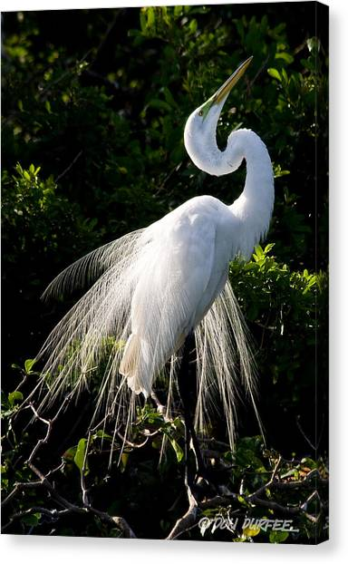 Showing Off Canvas Print by Don Durfee