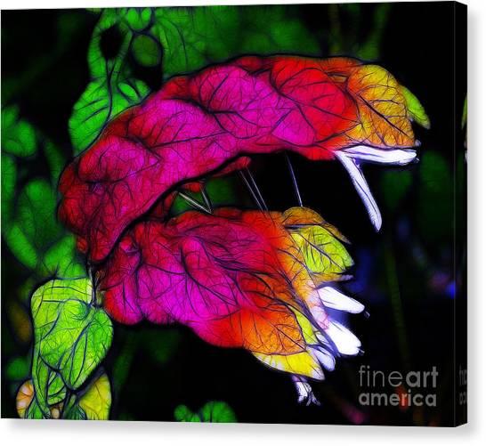 Shrimp Plant Canvas Print
