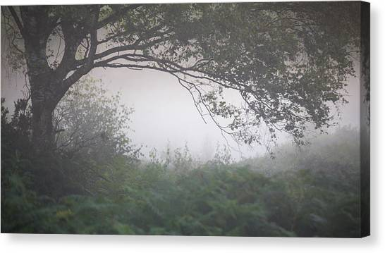 Sherwood Forest Canvas Print - Shrouded by Chris Dale