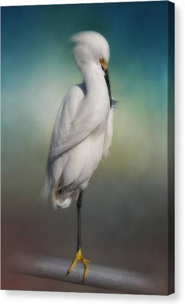 Egrets Canvas Print - Shy Egret by Kim Hojnacki