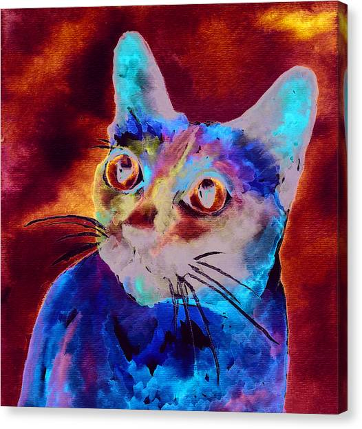 Siamese Canvas Print - Siamese Cat by Christy  Freeman