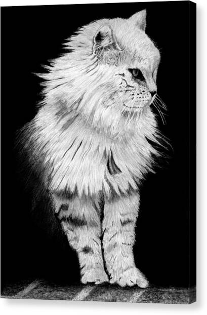 Siberian Cats Canvas Print - Siberian Cat Drawing by James Schultz