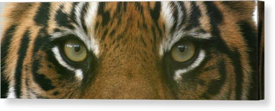 Siberian Eyes - Tiger Canvas Print