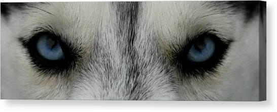 Siberian Eyes Canvas Print
