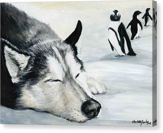 Siberian Huskey Canvas Print by Charlotte Yealey