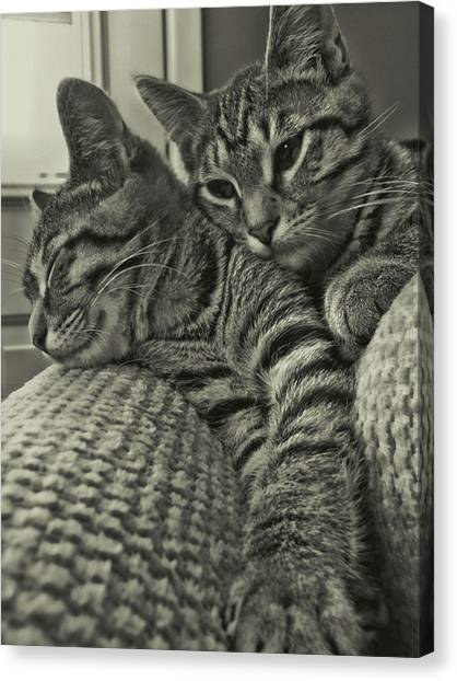 Siblings Canvas Print by JAMART Photography